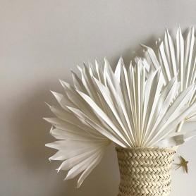 Bouquet de feuilles de palmier séchées blanchies
