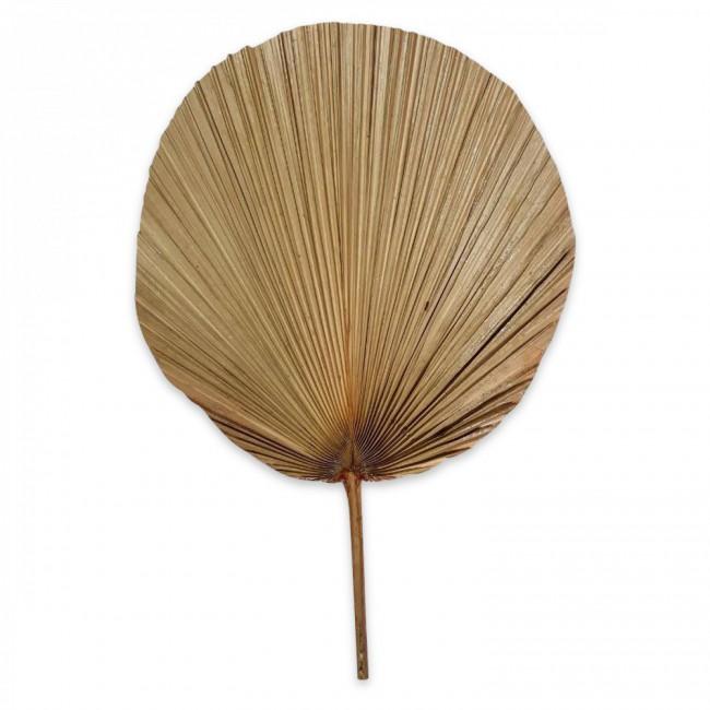 Eventail plissé en feuilles de palmier